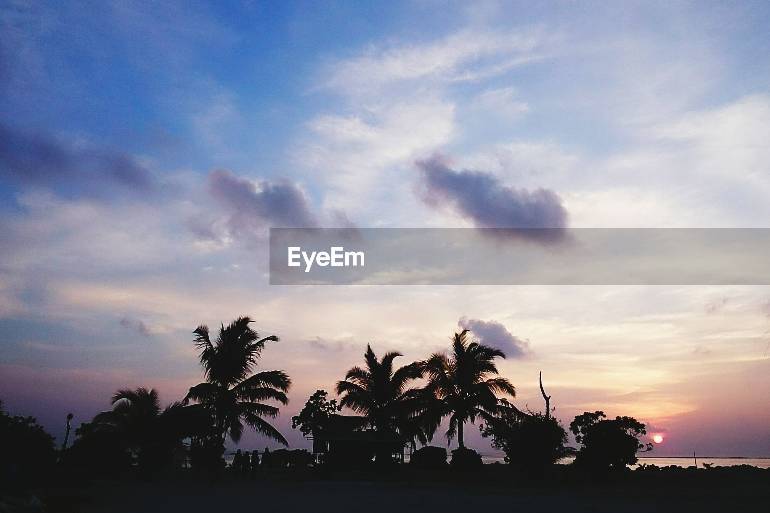 silhouette, sky, tree, sunset, cloud - sky, palm tree, tranquil scene, tranquility, beauty in nature, scenics, nature, cloud, cloudy, idyllic, dramatic sky, dusk, growth, outdoors, sea, no people