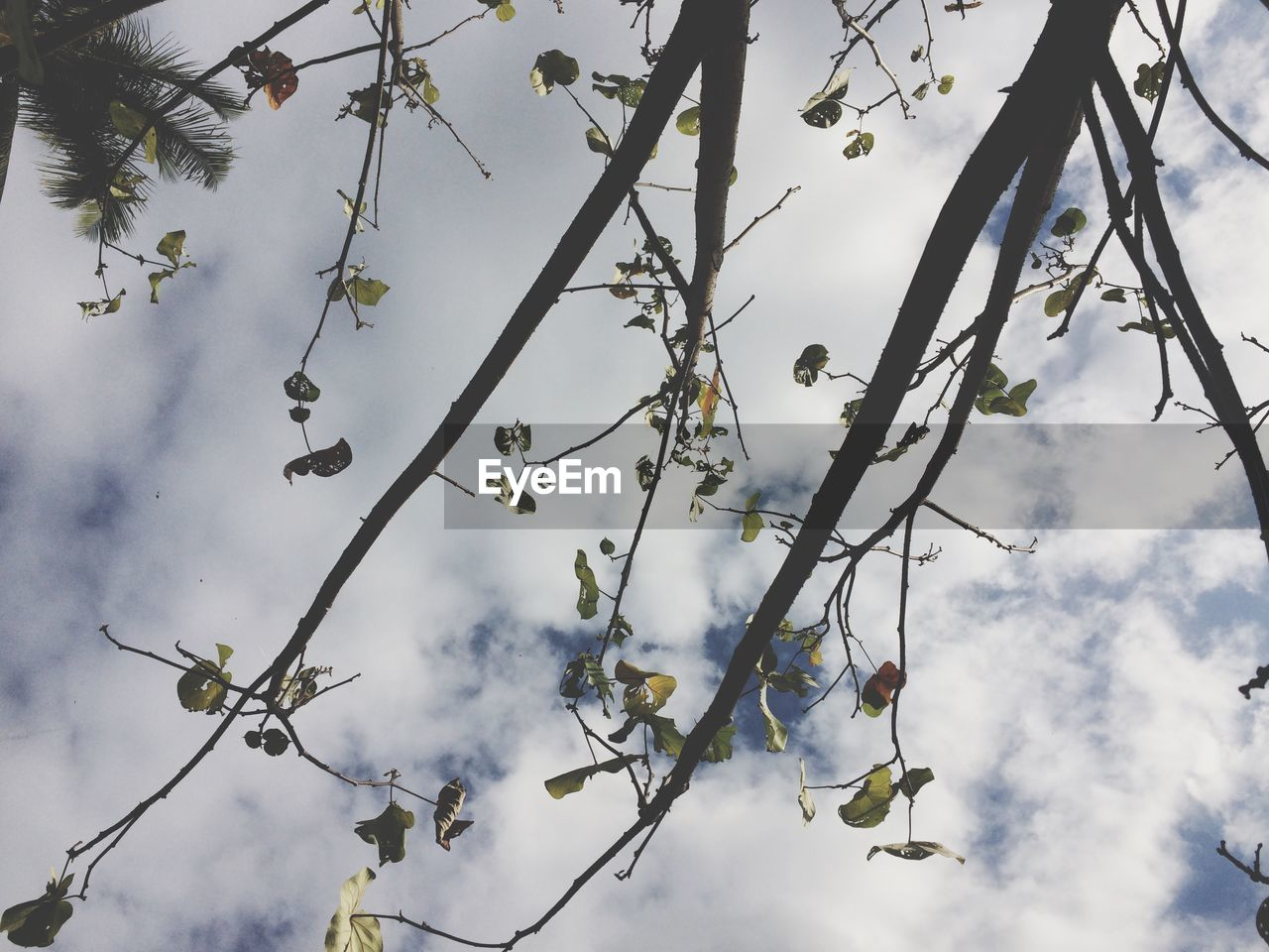 sky, cloud - sky, plant, low angle view, tree, growth, beauty in nature, no people, nature, branch, day, flower, flowering plant, tranquility, outdoors, vulnerability, fragility, leaf, sunlight, twig