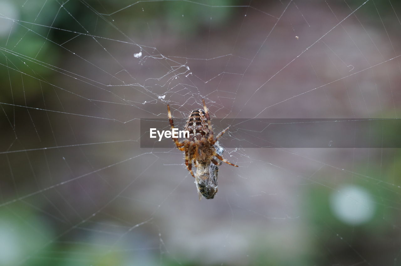 spider web, spider, one animal, animal themes, animals in the wild, insect, focus on foreground, web, close-up, nature, animal wildlife, no people, outdoors, day, animal leg