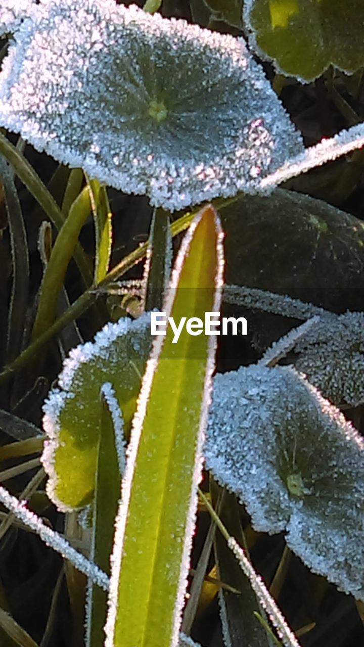 growth, plant, green color, aloe vera plant, leaf, nature, cactus, aloe, thorn, close-up, day, beauty in nature, outdoors, no people, alternative medicine, freshness, herbal medicine