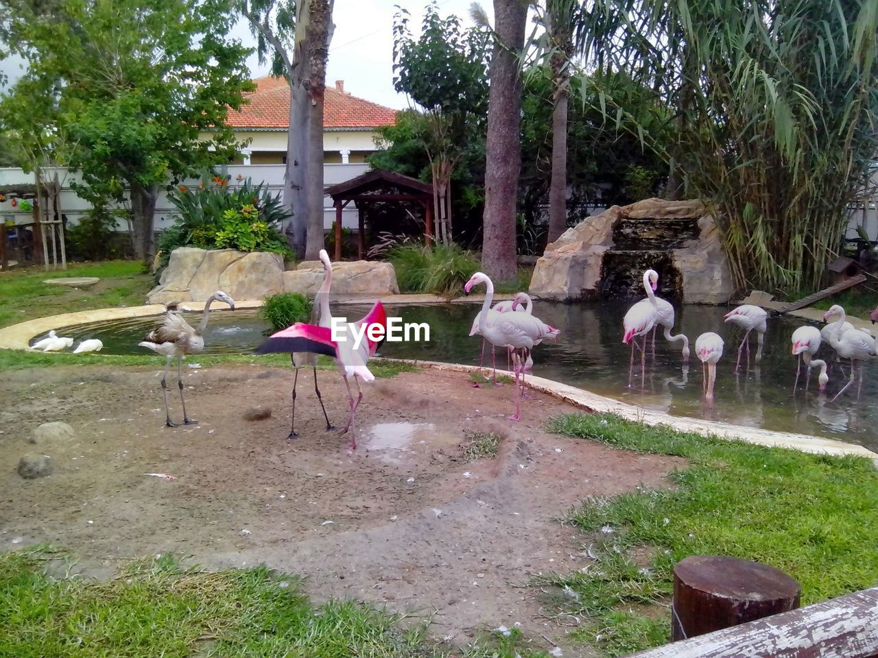 tree, animal themes, day, nature, large group of animals, outdoors, bird, flamingo, no people, growth, mammal, domestic animals, grass, beauty in nature, sky