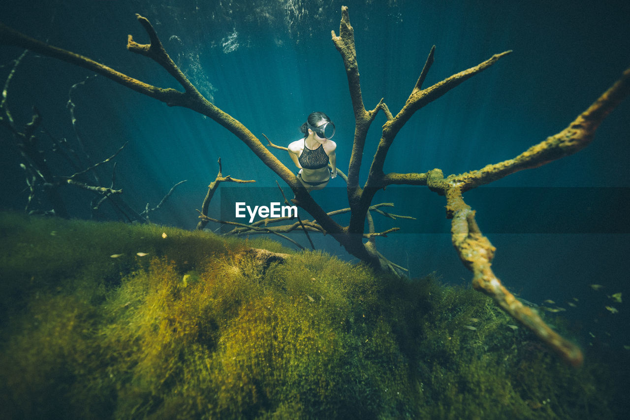 underwater, sea, water, animal, animals in the wild, swimming, nature, animal themes, animal wildlife, undersea, plant, sea life, vertebrate, one animal, one person, beauty in nature, leisure activity, marine, real people
