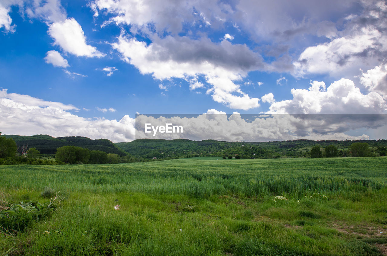 environment, landscape, sky, cloud - sky, land, grass, field, nature, plant, beauty in nature, green color, no people, scenics - nature, tranquil scene, freedom, tranquility, growth, plain, rural scene, positive emotion, spring