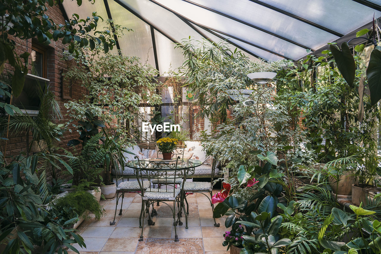 POTTED PLANT ON TABLE IN GREENHOUSE