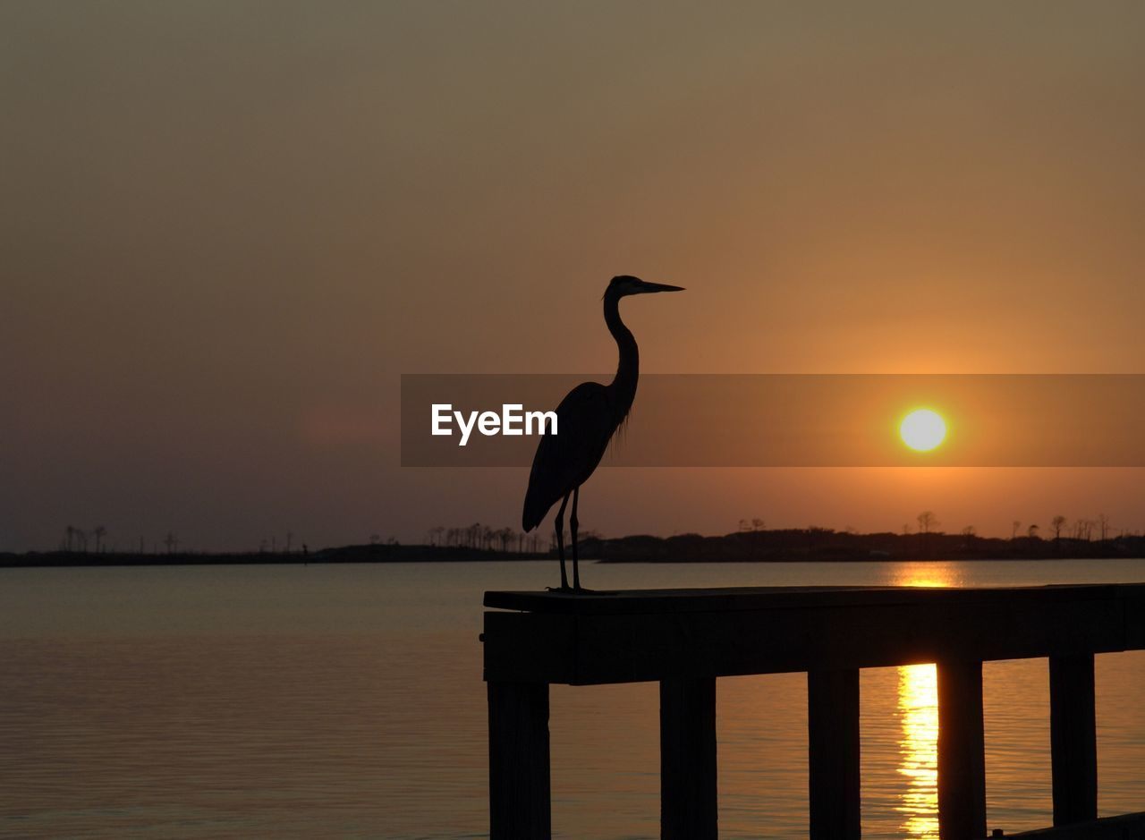 sunset, bird, one animal, animal themes, animals in the wild, water, silhouette, nature, animal wildlife, heron, beauty in nature, outdoors, perching, no people, lake, sky, gray heron, crane - bird, day