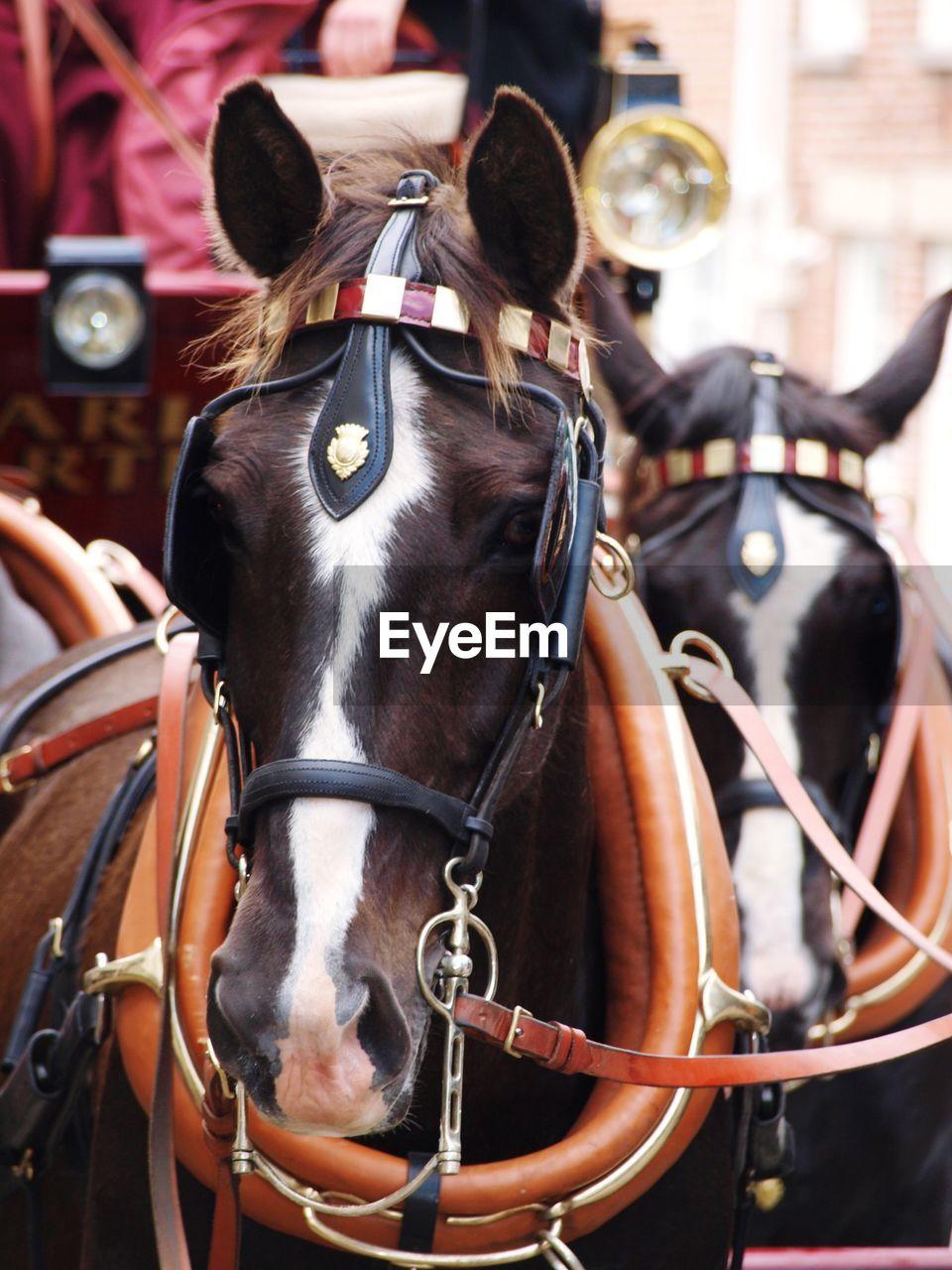 horse, domestic animals, livestock, domestic, animal wildlife, mammal, animal, animal themes, bridle, focus on foreground, vertebrate, pets, horse cart, working animal, day, street, cart, close-up, horsedrawn, city, herbivorous