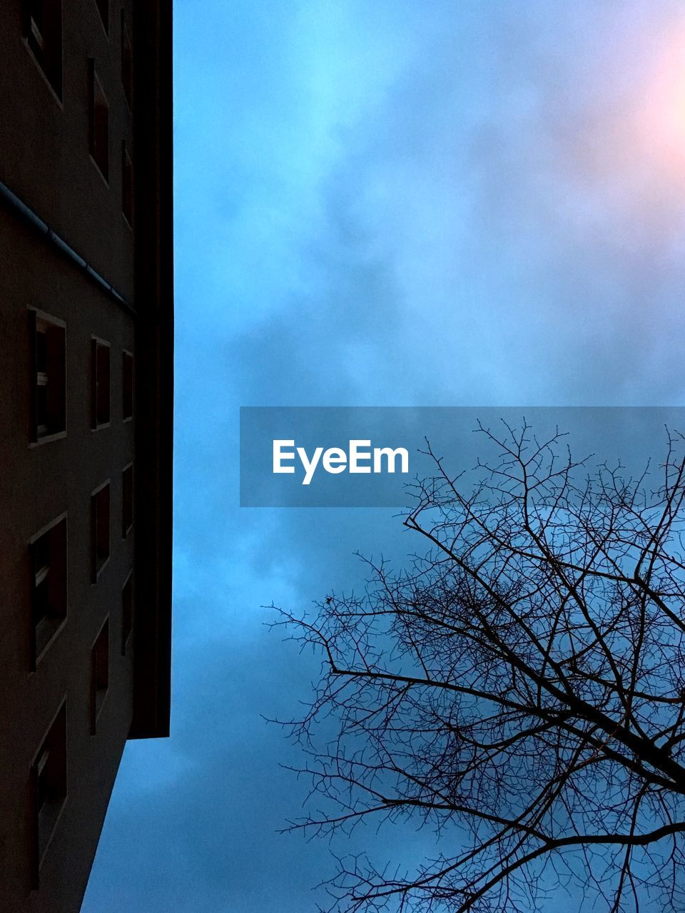 sky, tree, cloud - sky, nature, low angle view, built structure, architecture, building exterior, bare tree, branch, plant, no people, day, building, outdoors, blue, silhouette, beauty in nature, window, growth, directly below