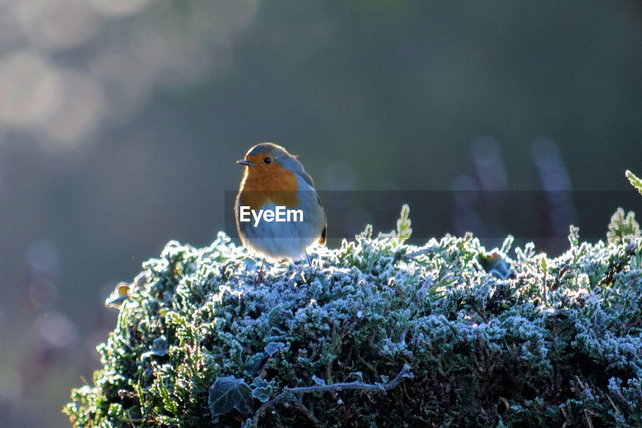 Bird Perching On Fresh Flower