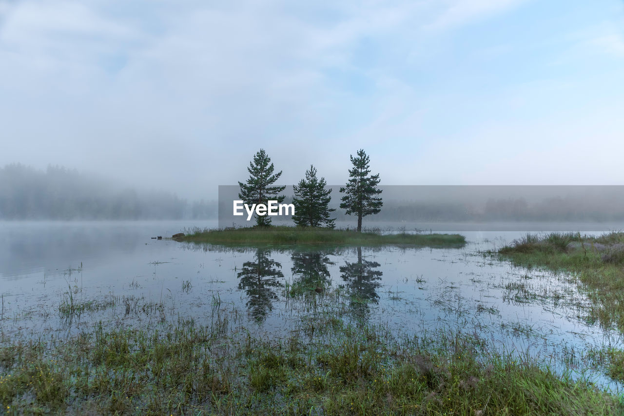 tranquility, tranquil scene, water, beauty in nature, plant, tree, scenics - nature, sky, fog, non-urban scene, no people, lake, nature, idyllic, day, growth, cloud - sky, environment, outdoors, hazy