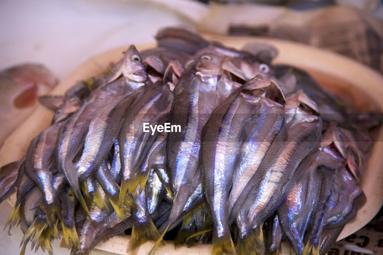 seafood, freshness, food and drink, food, raw food, healthy eating, animal, close-up, wellbeing, market, fish, vertebrate, retail, for sale, no people, focus on foreground, high angle view, large group of objects, indoors, fish market
