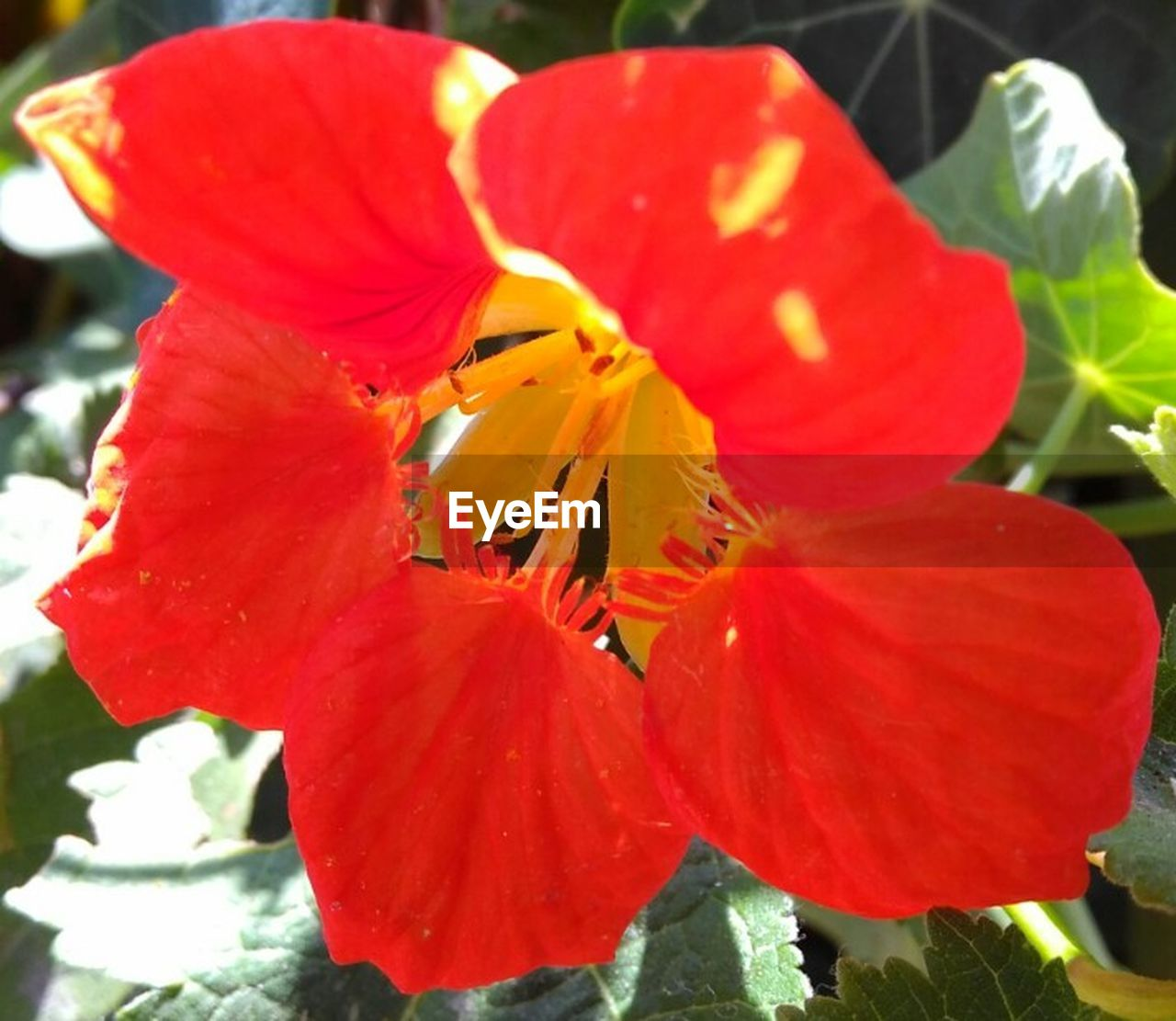 petal, red, flower, beauty in nature, fragility, flower head, growth, nature, freshness, no people, close-up, plant, outdoors, stamen, day, hibiscus, blooming, day lily