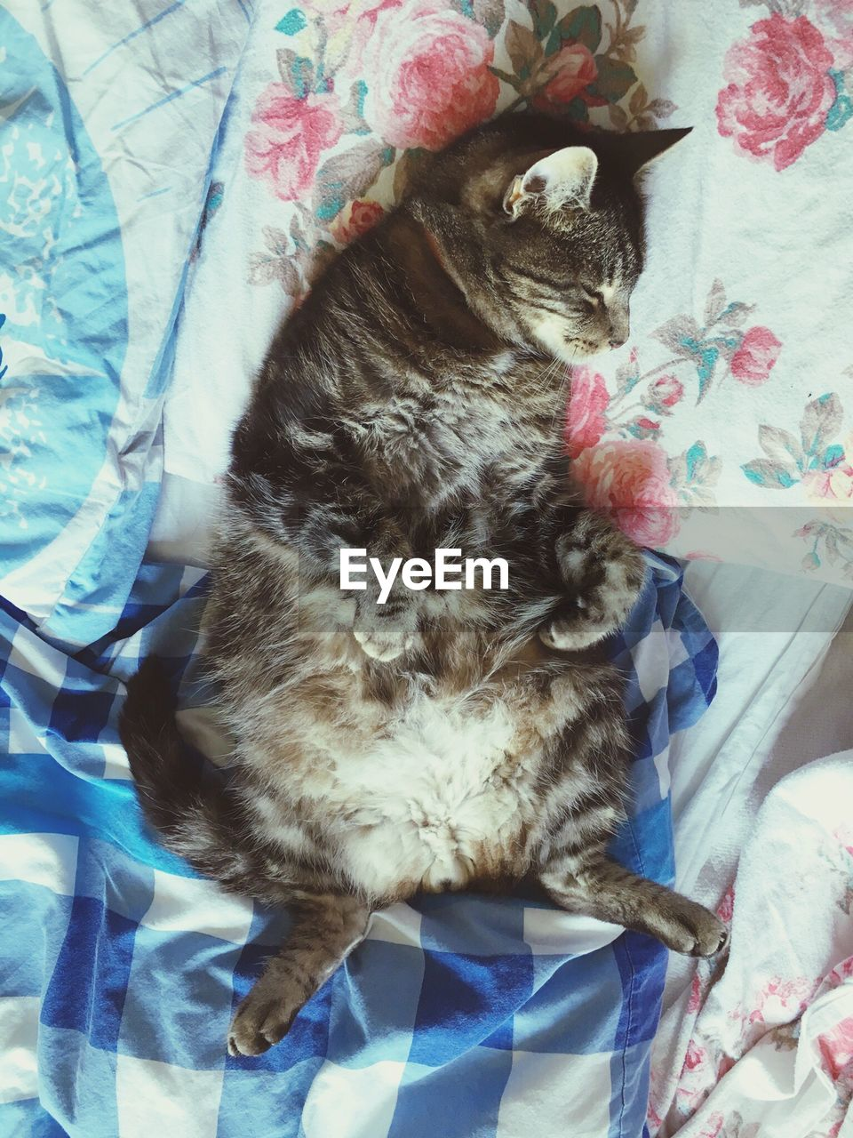 CLOSE-UP OF CAT SITTING ON BED WITH BLANKET