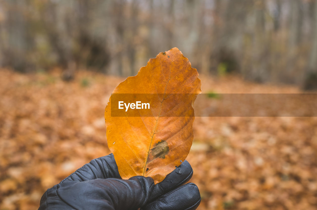 autumn, focus on foreground, food and drink, human hand, one person, orange color, human body part, holding, real people, food, leaf, outdoors, close-up, freshness, day, fruit, lifestyles, healthy eating, nature, ready-to-eat, people
