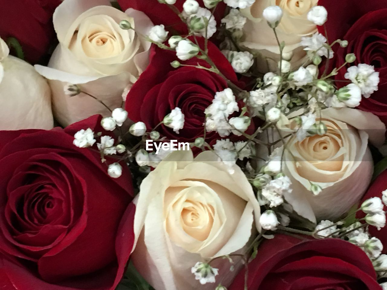 flower, rose - flower, bouquet, beauty in nature, petal, fragility, flower head, nature, wedding, celebration, white color, freshness, no people, red, indoors, close-up, day