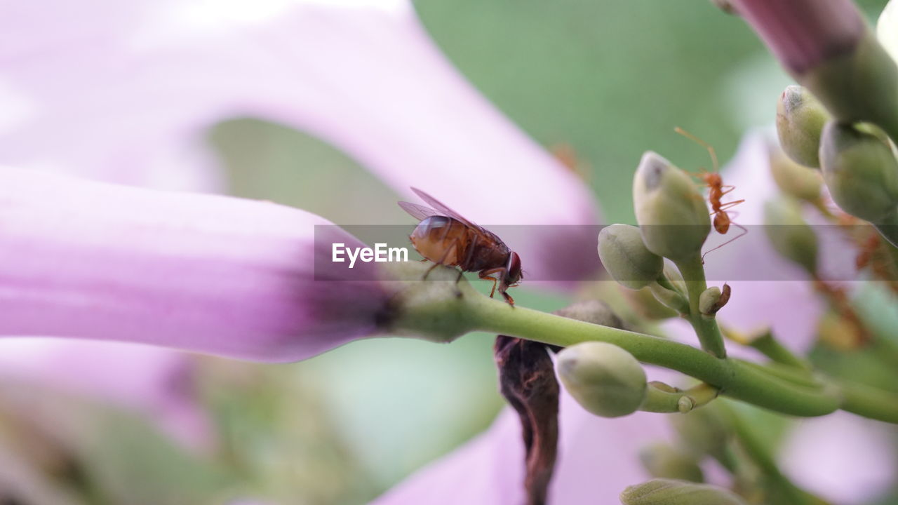 invertebrate, animal, insect, animals in the wild, animal wildlife, one animal, animal themes, plant, flowering plant, flower, beauty in nature, close-up, growth, selective focus, vulnerability, fragility, freshness, petal, focus on foreground, day, flower head, pollination, pollen, finger, purple