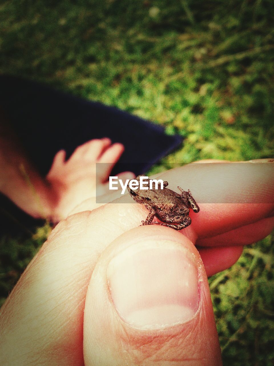 Close-Up Of A Hand Holding Frog