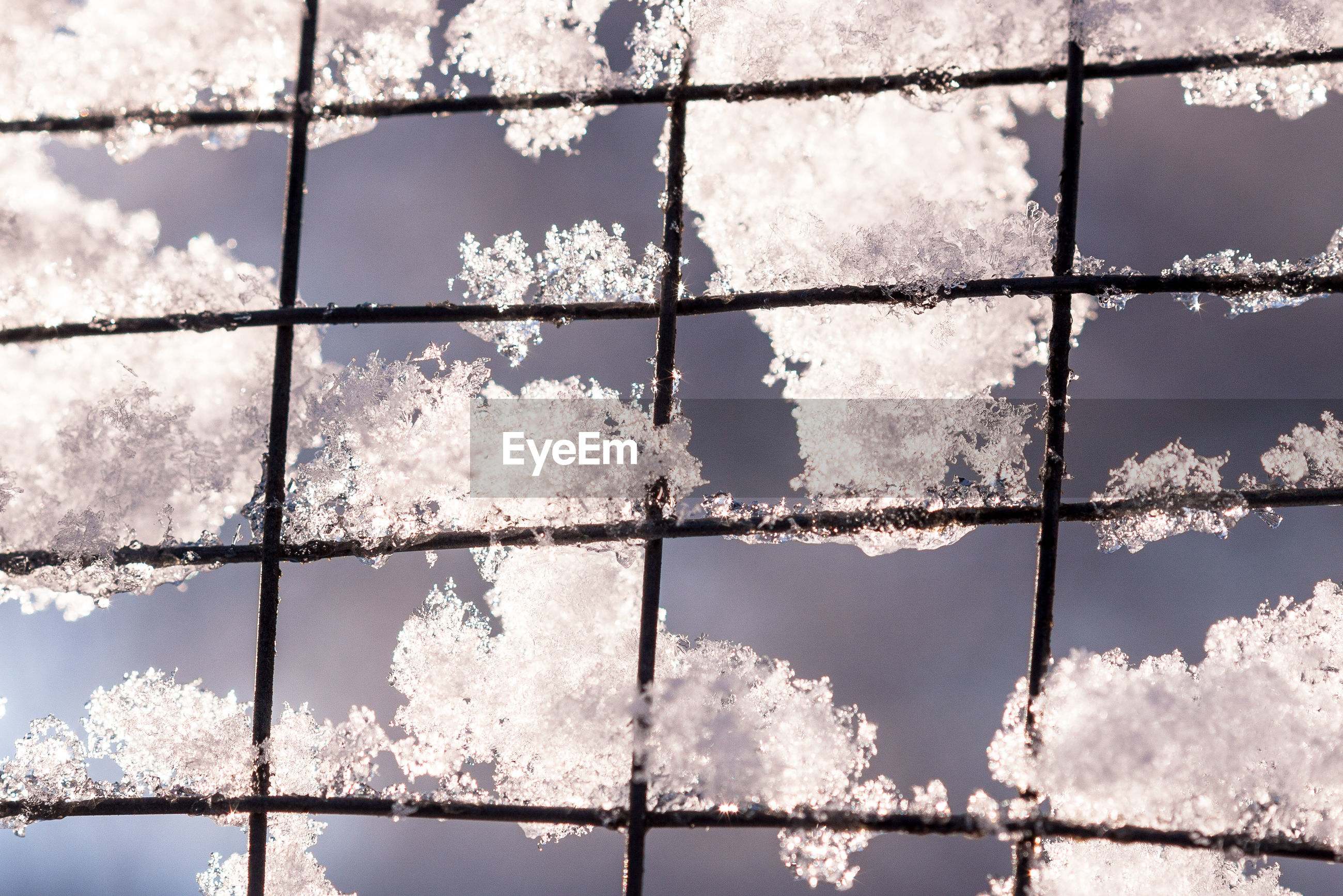Close-up of snow on metal fence