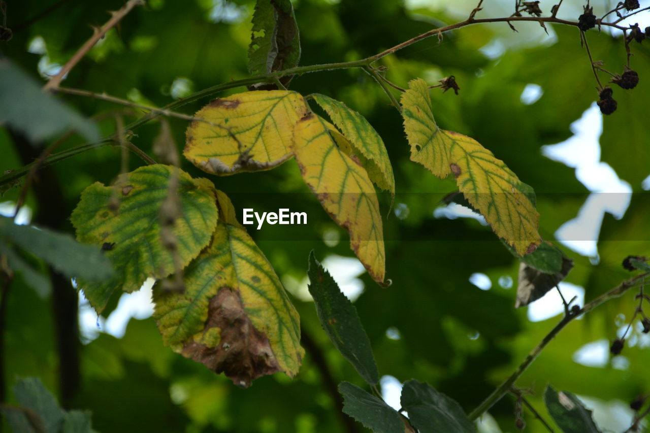 leaf, growth, green color, nature, day, outdoors, no people, low angle view, tree, beauty in nature, branch, close-up, freshness
