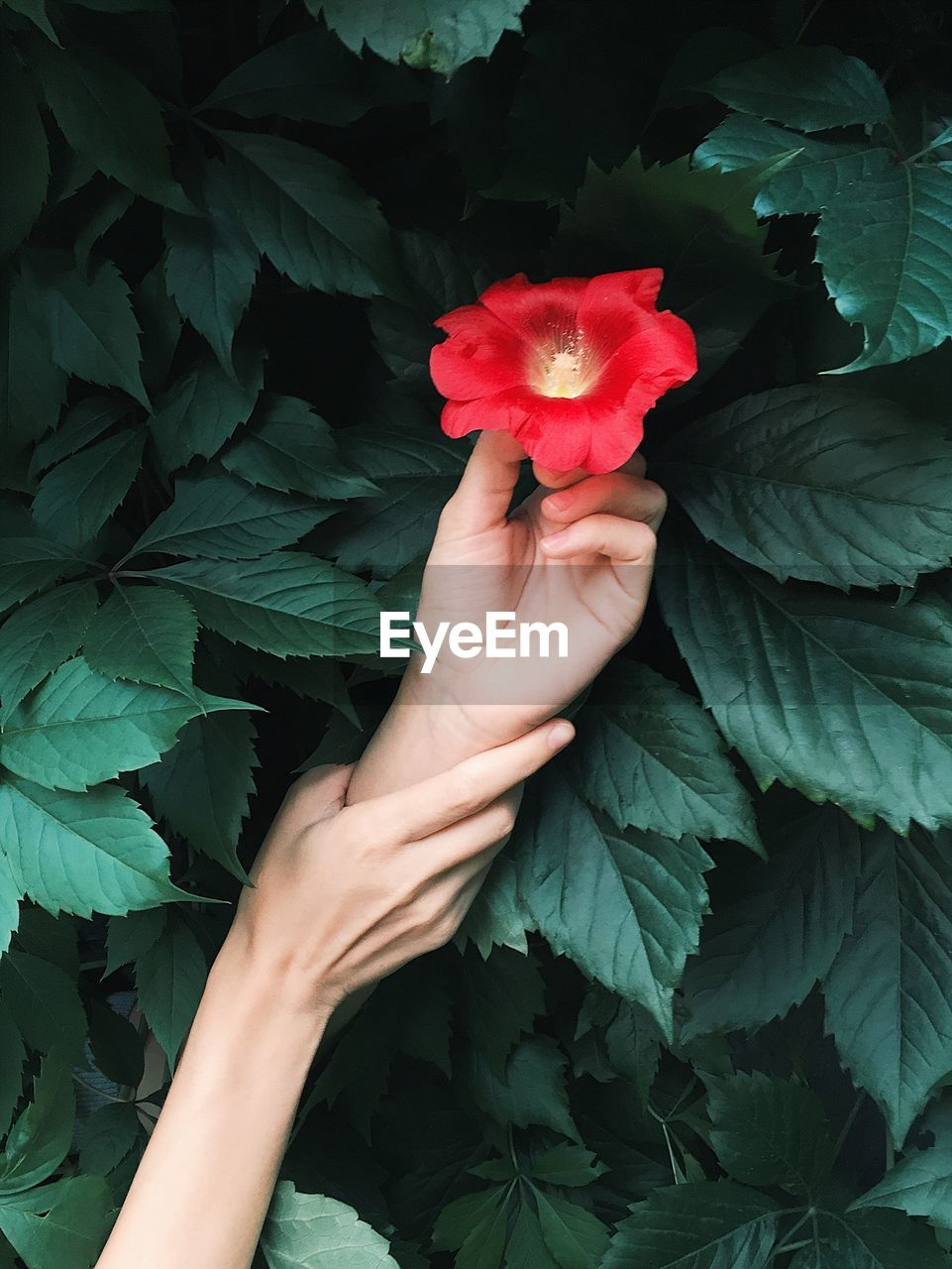 Cropped Image Of Woman Holding Man Hand From Picking Flowers