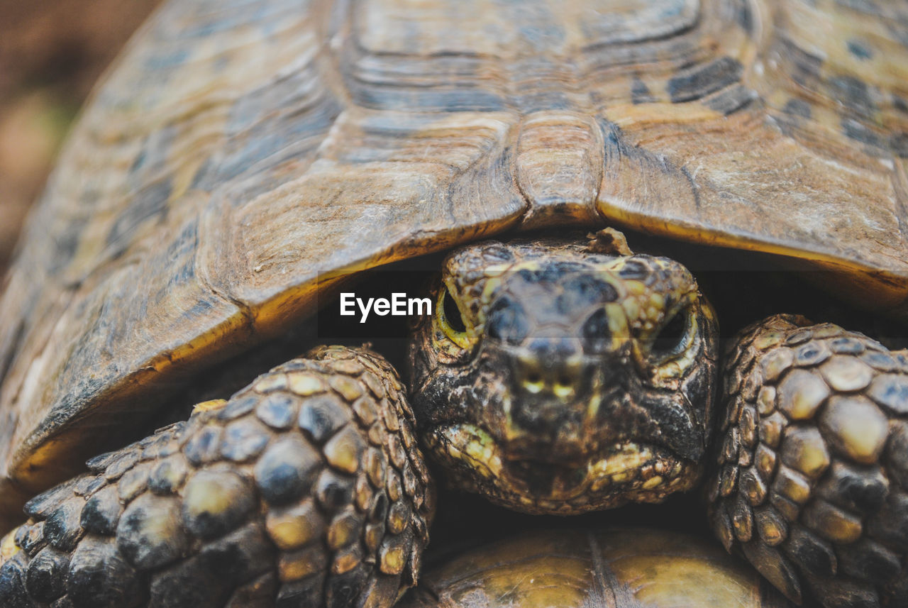 Close-up of tortoise