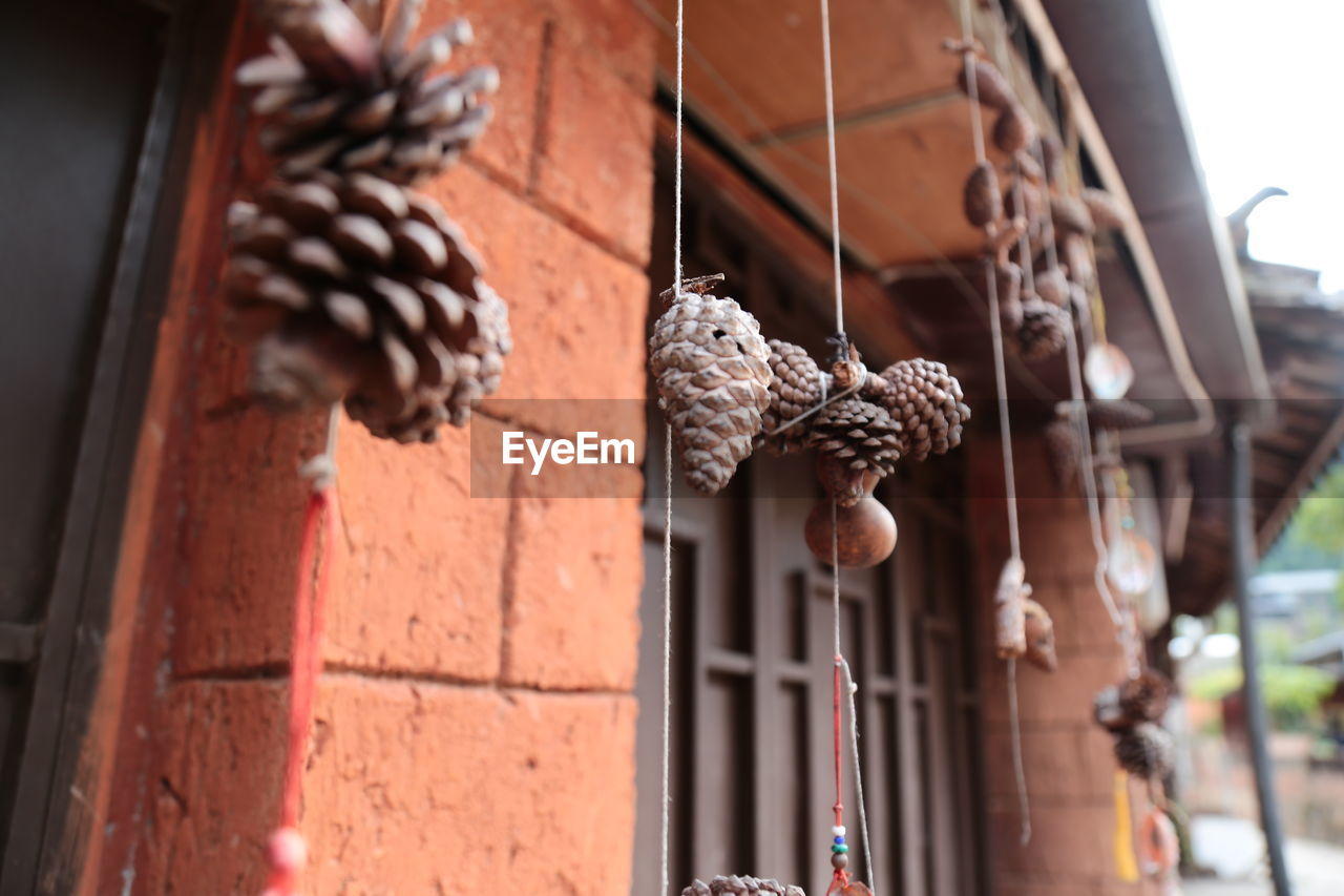 Low angle view of pine cones hanging on strings against house