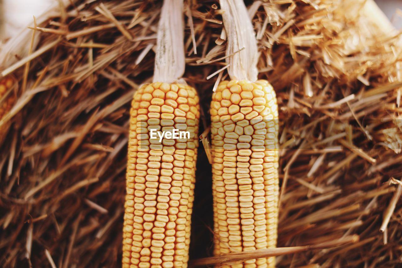 Close-Up Of Corns On Hay At Farm