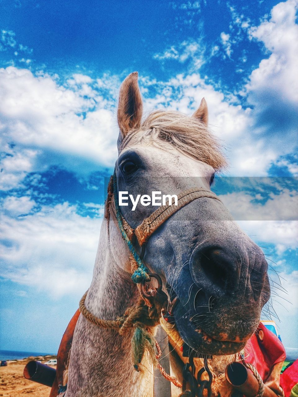 Low angle view of horse at beach against sky
