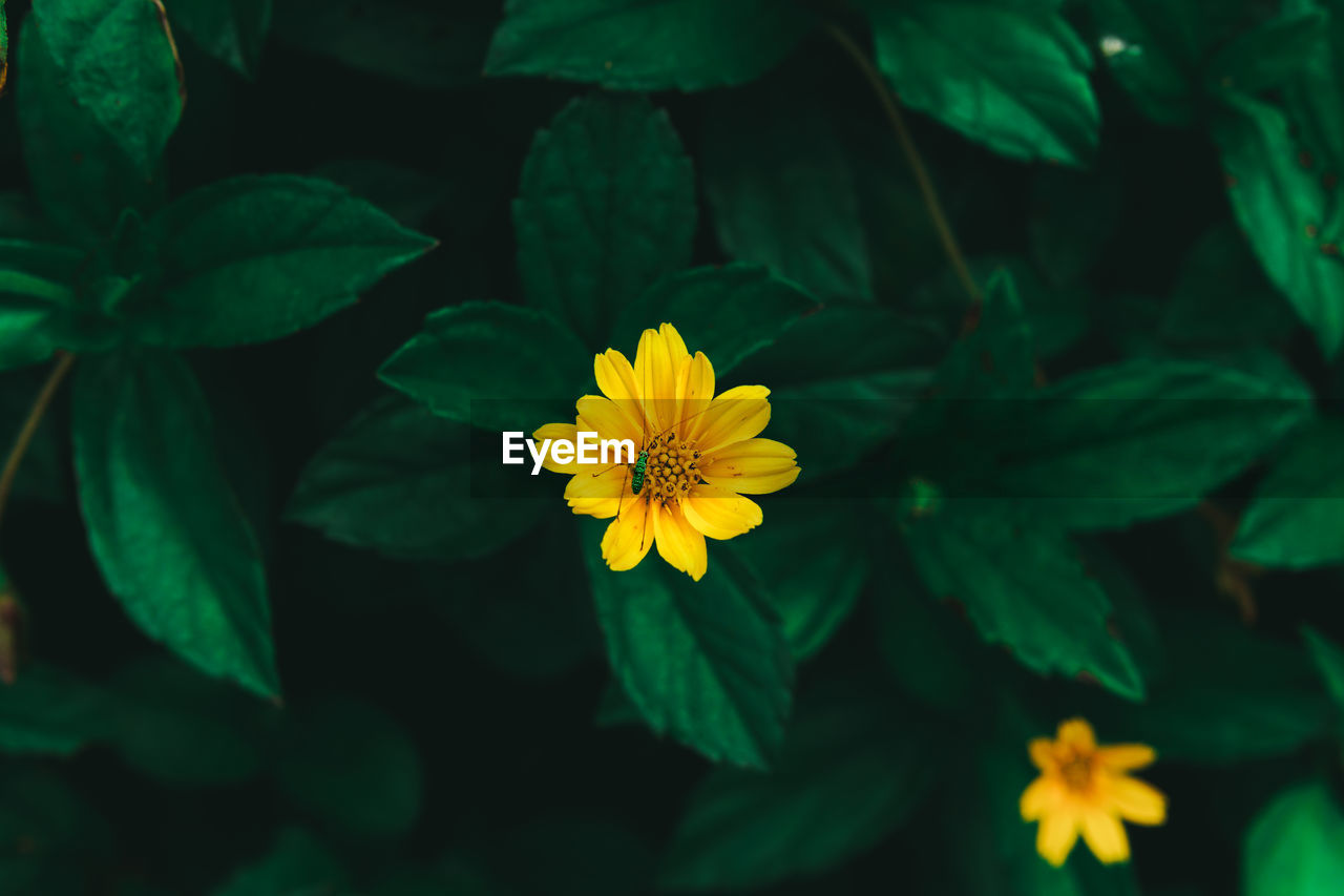 flowering plant, flower, plant, growth, freshness, fragility, beauty in nature, flower head, vulnerability, inflorescence, petal, leaf, plant part, close-up, yellow, nature, green color, no people, day, outdoors, pollen