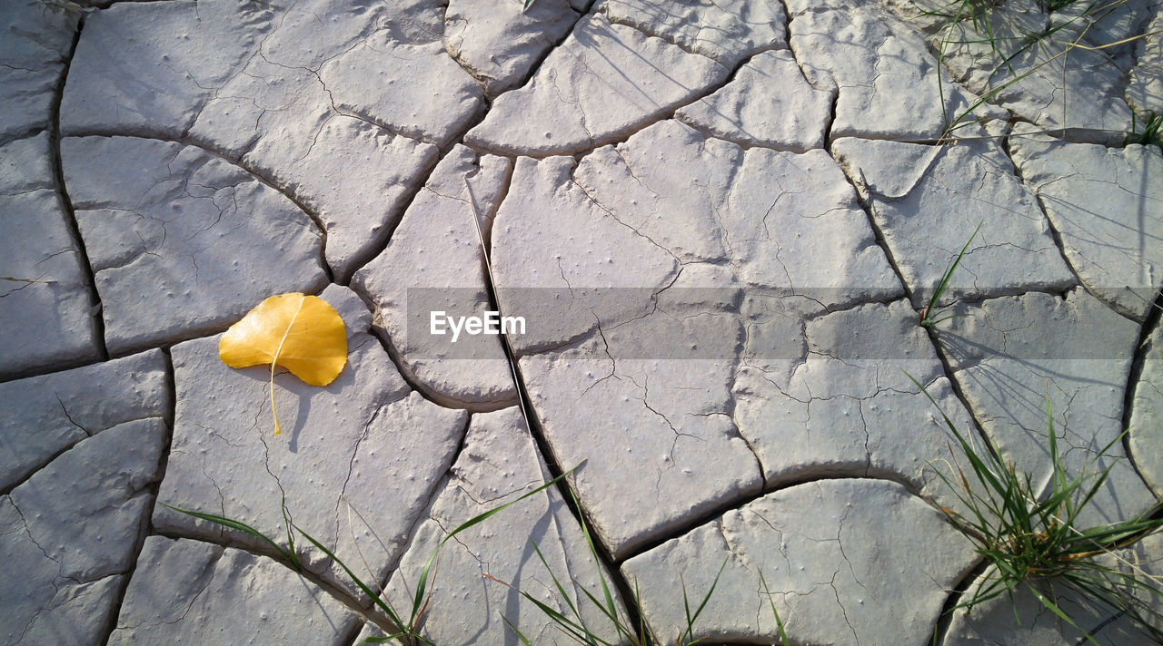 plant, flower, flowering plant, cracked, yellow, no people, growth, day, nature, close-up, beauty in nature, freshness, fragility, flower head, vulnerability, outdoors, inflorescence, petal, leaf, full frame, springtime