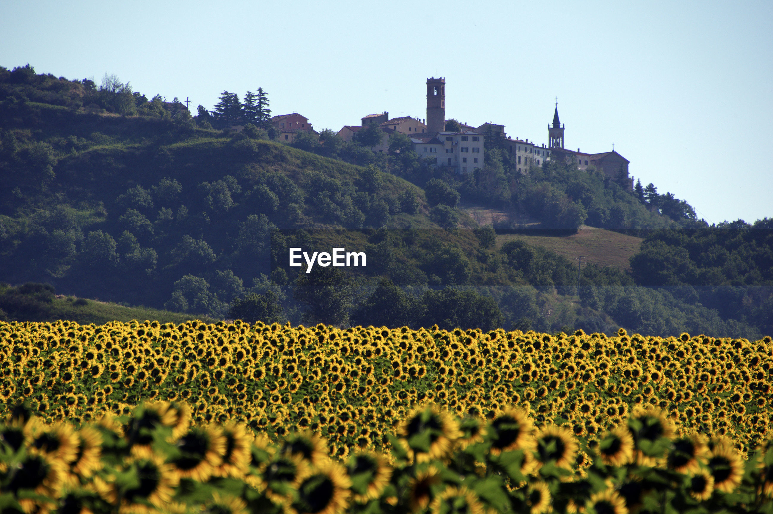 VIEW OF SUNFLOWER FIELD AGAINST SKY