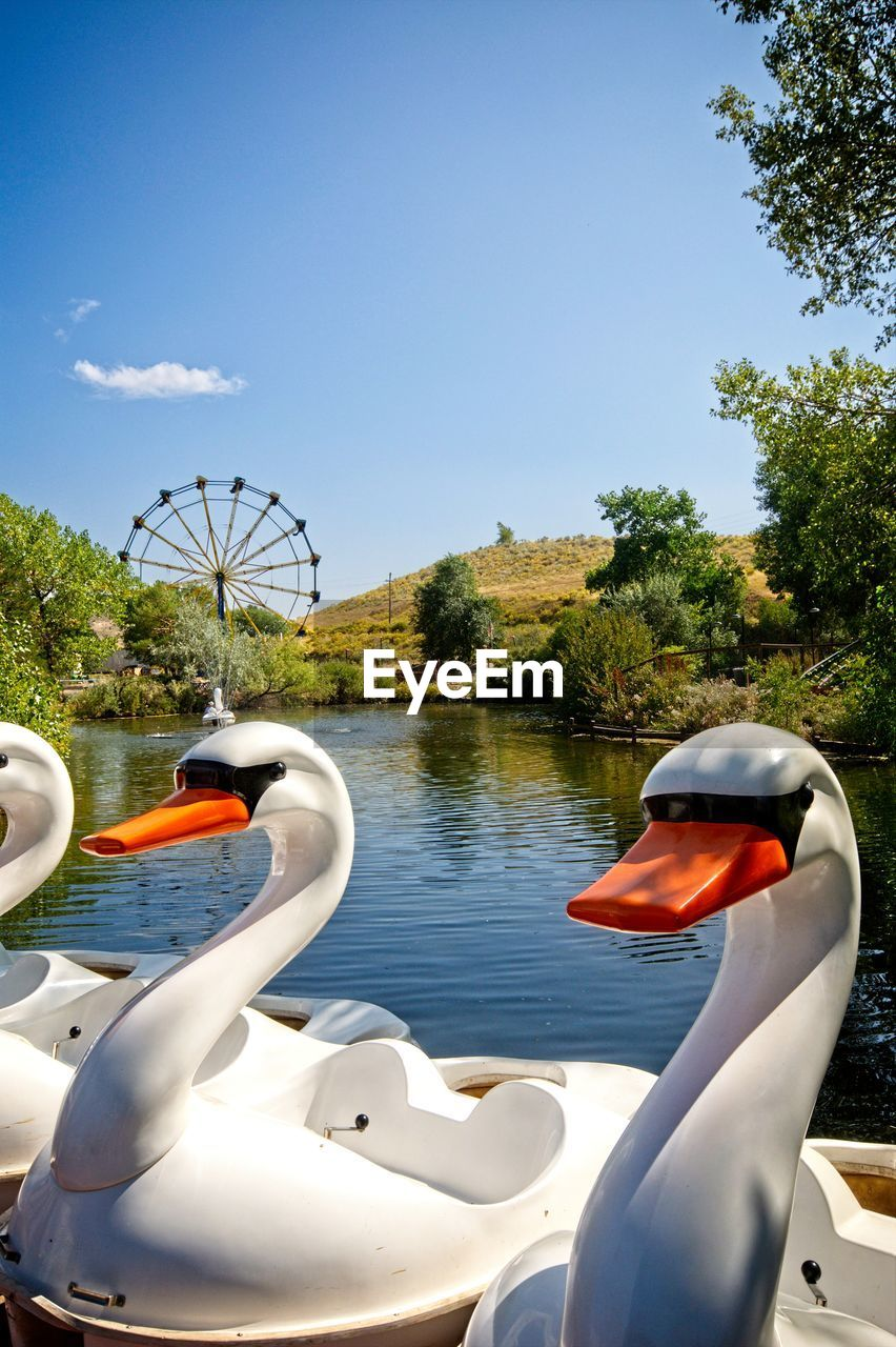 water, sky, tree, nature, day, plant, bird, transportation, lake, nautical vessel, animal themes, swan, no people, pedal boat, animal, mode of transportation, inflatable, outdoors, animal wildlife