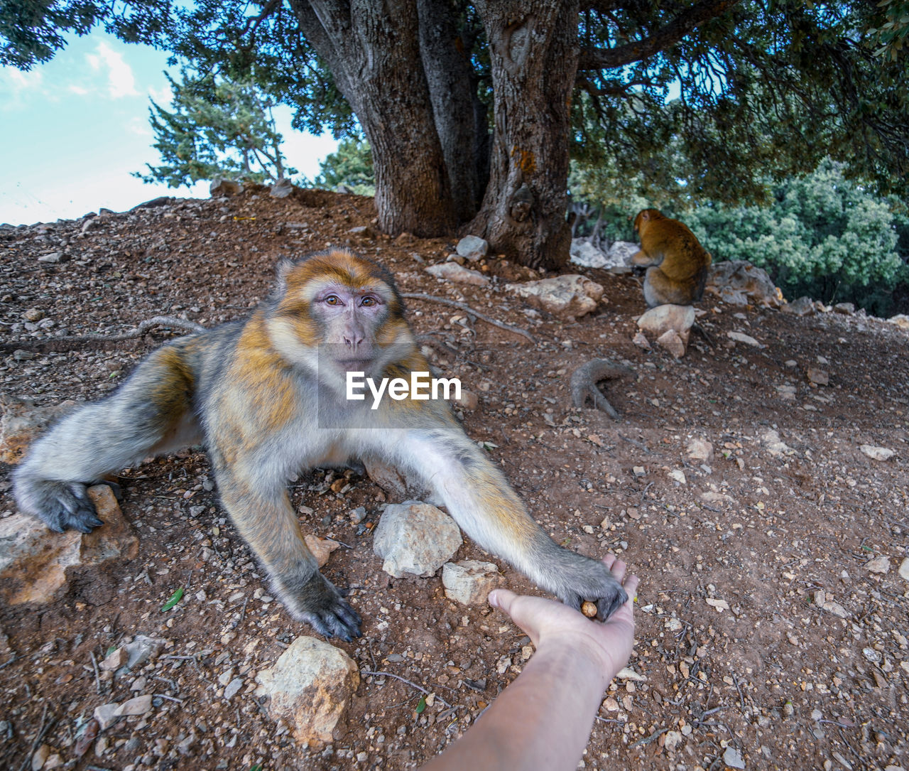 animal wildlife, mammal, tree, animals in the wild, primate, group of animals, day, plant, nature, two animals, vertebrate, people, sitting, outdoors, land, care