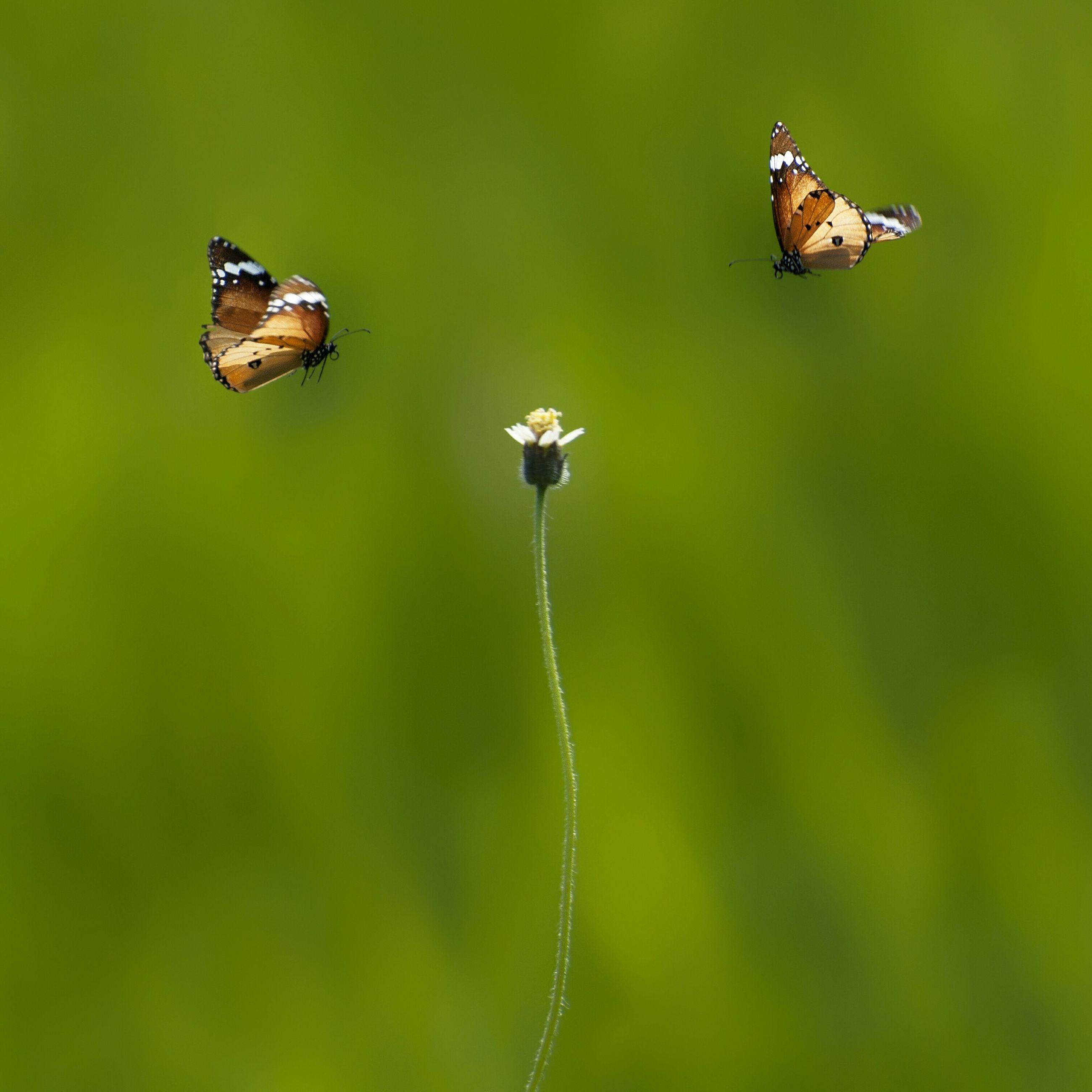 Close-up of flower amidst butterflies