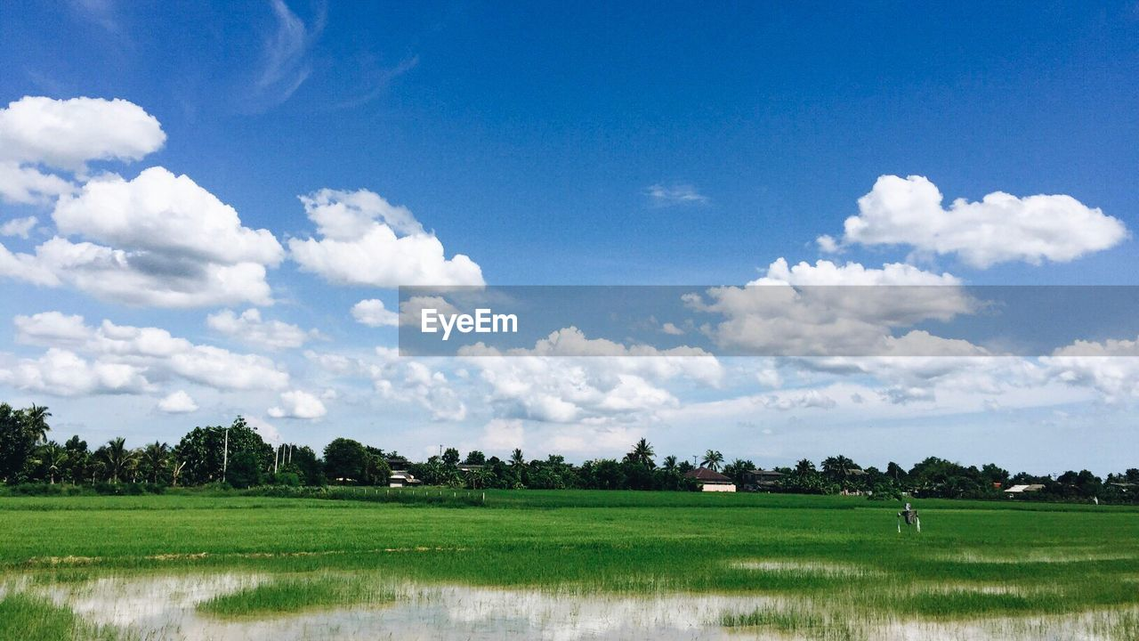 field, grass, landscape, nature, cloud - sky, tranquil scene, beauty in nature, scenics, agriculture, sky, tranquility, day, tree, growth, green color, outdoors, water, rice paddy, no people, rural scene, golf course