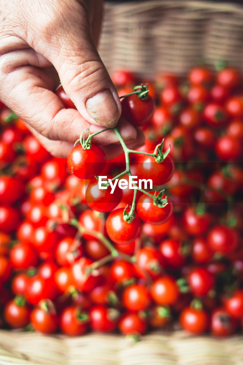 human hand, hand, human body part, food and drink, one person, red, freshness, food, healthy eating, fruit, holding, real people, wellbeing, large group of objects, body part, selective focus, finger, close-up, human finger, ripe