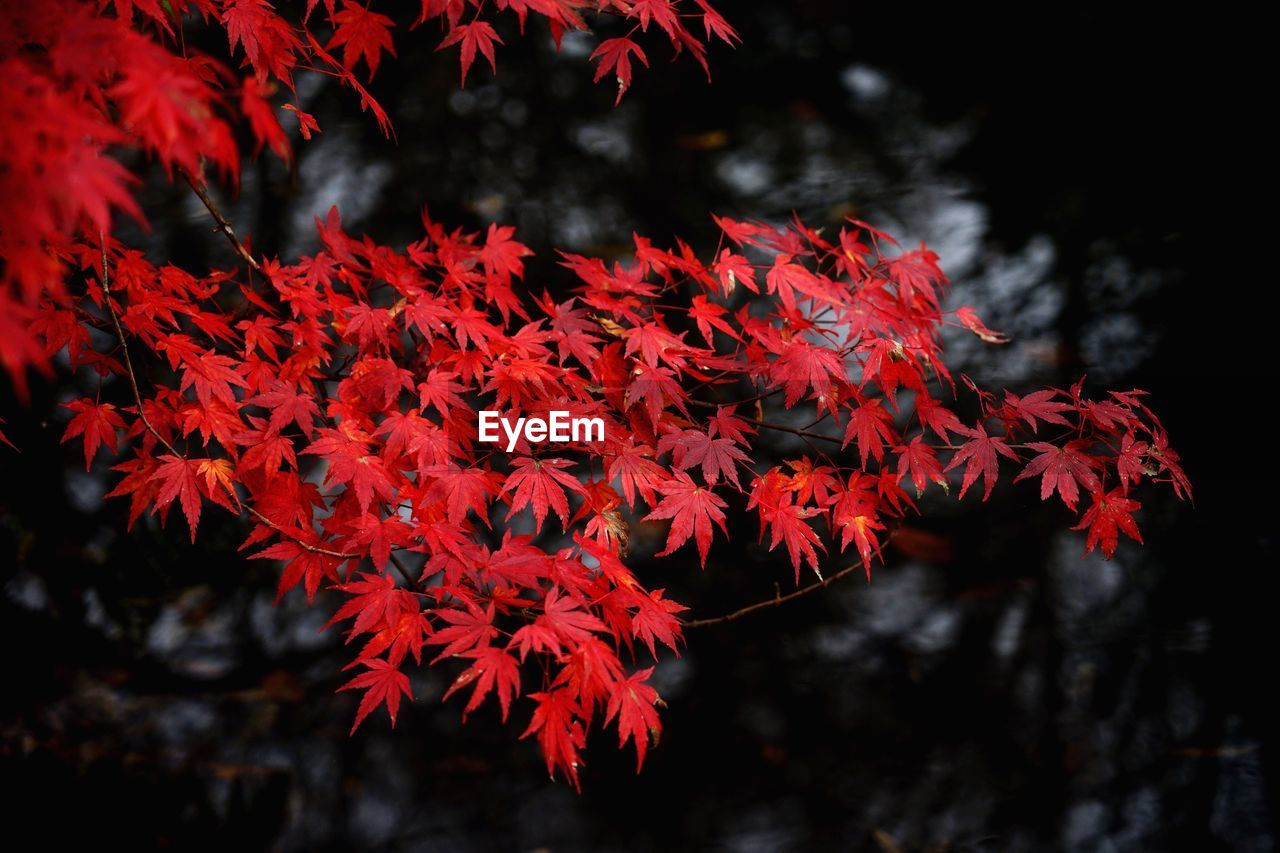 Red autumn leaves on twigs
