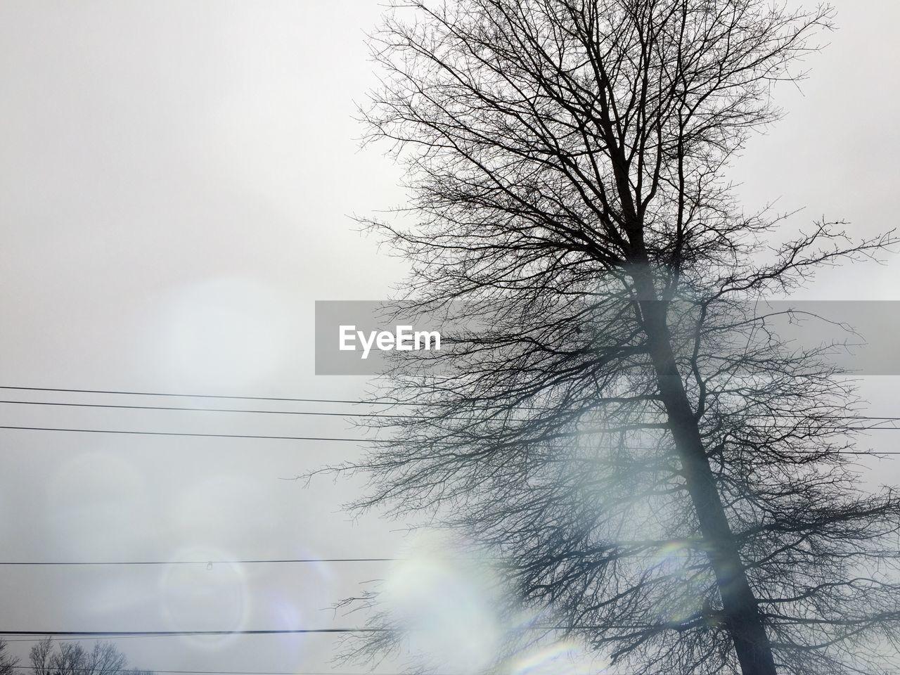 TREE AGAINST SKY IN FOG