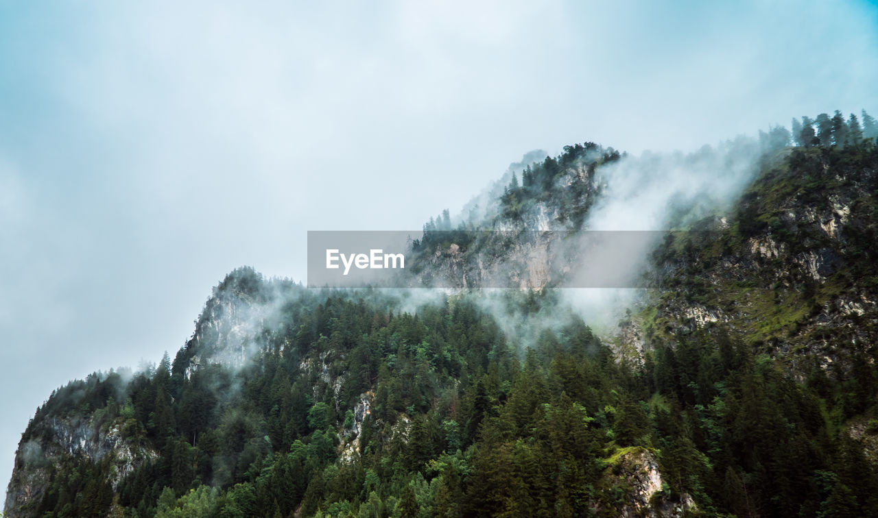 tree, plant, mountain, scenics - nature, beauty in nature, sky, nature, day, tranquil scene, cloud - sky, no people, forest, non-urban scene, tranquility, smoke - physical structure, growth, land, environment, outdoors, low angle view, power in nature