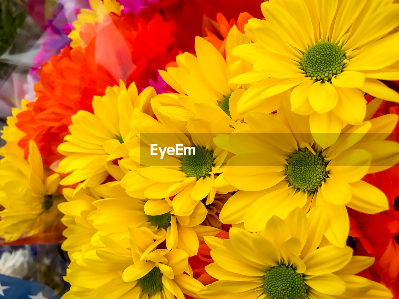 flower, fragility, yellow, petal, freshness, beauty in nature, nature, flower head, no people, growth, outdoors, close-up, blooming, day, multi colored, flower market