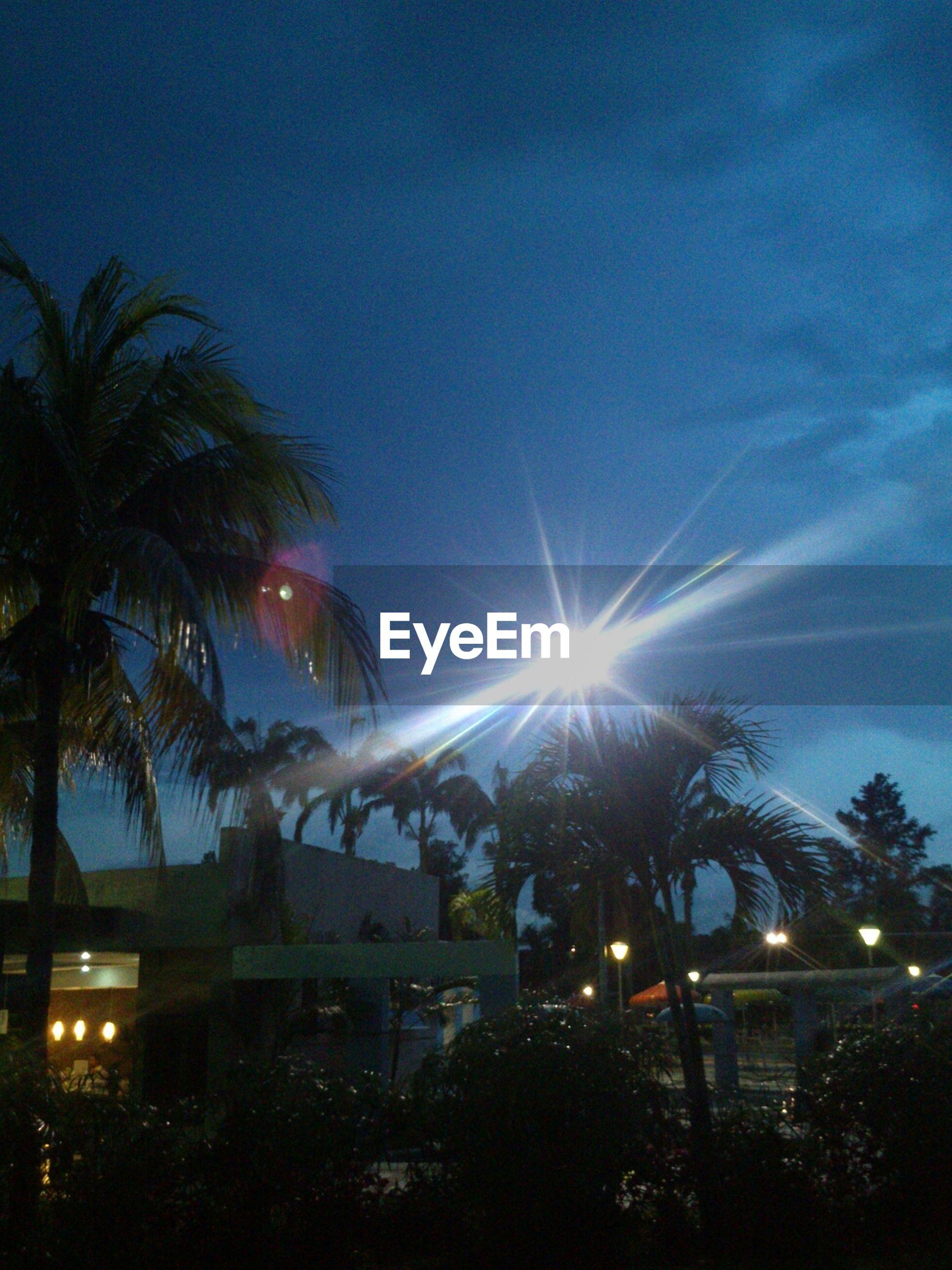illuminated, tree, building exterior, sky, built structure, lens flare, sun, low angle view, architecture, night, street light, blue, silhouette, palm tree, lighting equipment, sunbeam, city, sunlight, dusk, clear sky