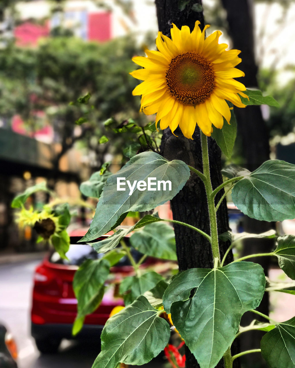 plant, leaf, plant part, growth, flowering plant, flower, beauty in nature, freshness, close-up, vulnerability, focus on foreground, flower head, yellow, petal, fragility, nature, inflorescence, green color, day, no people, outdoors, sunflower