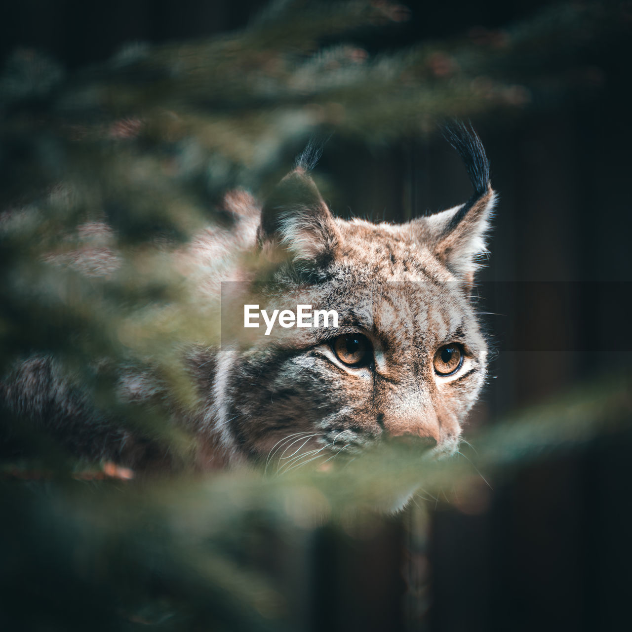 one animal, animal themes, mammal, animals in the wild, feline, no people, day, animal wildlife, looking at camera, outdoors, portrait, close-up, domestic animals, nature