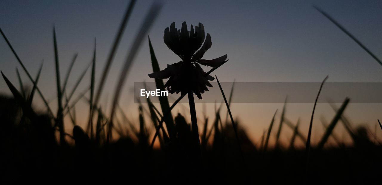 silhouette, sunset, sky, close-up, beauty in nature, plant, growth, no people, focus on foreground, nature, field, fragility, flowering plant, flower, dusk, outdoors, tranquility, land, vulnerability, plant stem, flower head