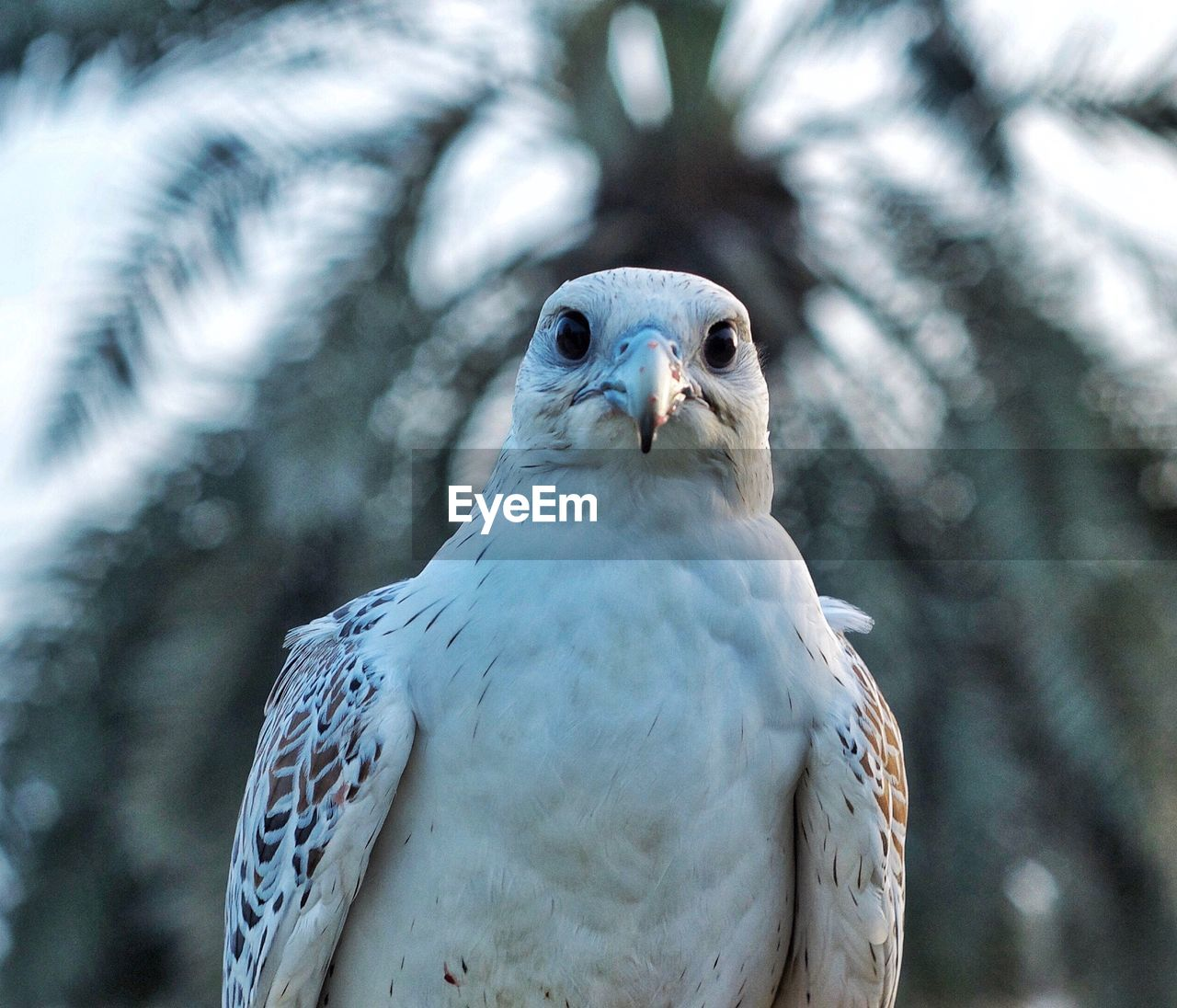animal themes, animal, one animal, vertebrate, animal wildlife, bird, animals in the wild, close-up, focus on foreground, bird of prey, day, no people, nature, portrait, outdoors, looking at camera, looking, beak, front view, animal head, falcon - bird, eagle, animal eye