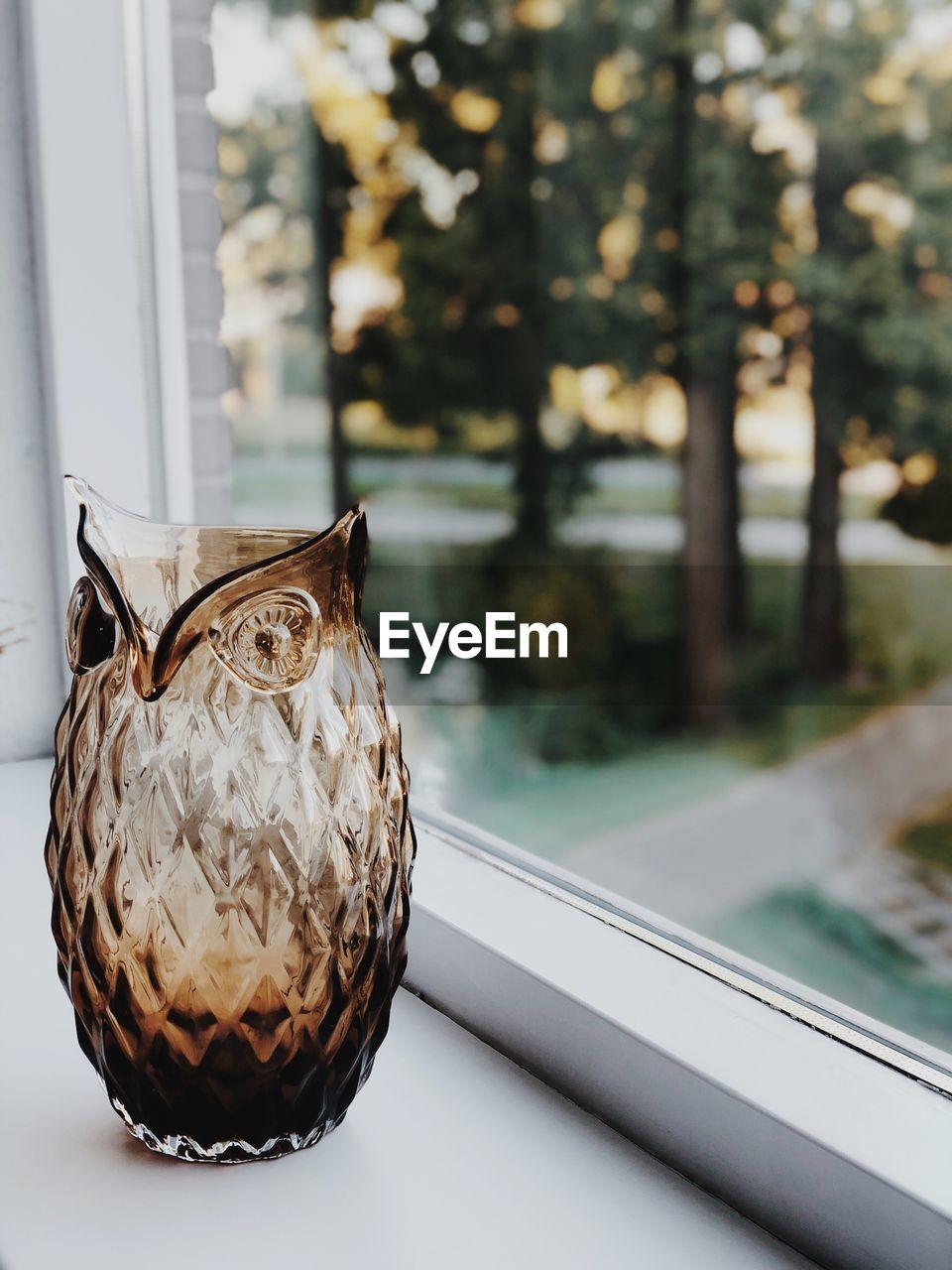 CLOSE-UP OF A BIRD ON WINDOW