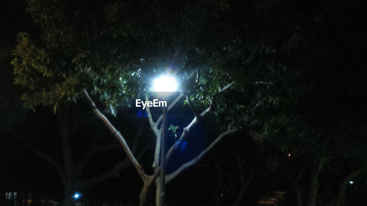 night, tree, illuminated, outdoors, nature, no people, beauty in nature