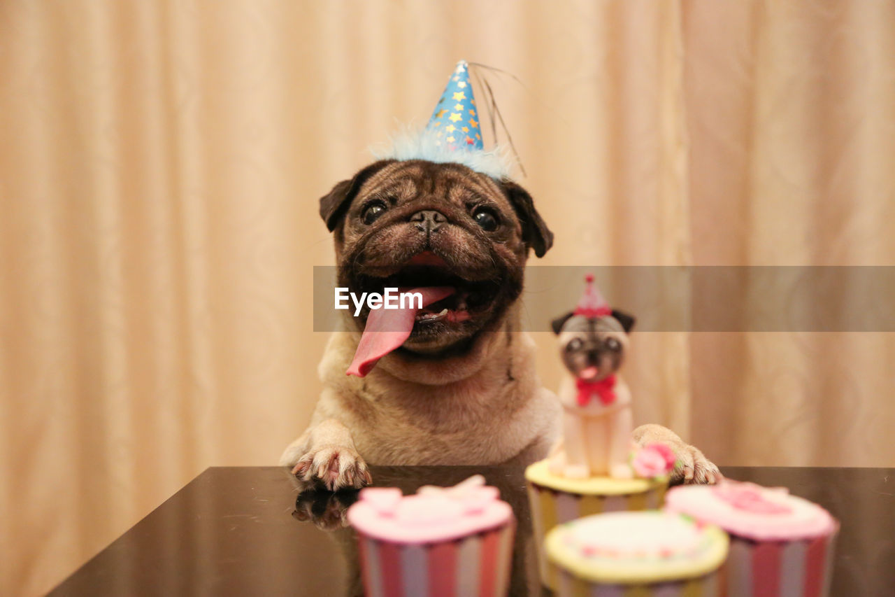 celebration, indoors, anniversary, mammal, birthday, event, one animal, animal, sweet food, pets, animal themes, party hat, fun, domestic, domestic animals, cake, curtain, sweet, food, candle, small, no people, birthday candles, temptation