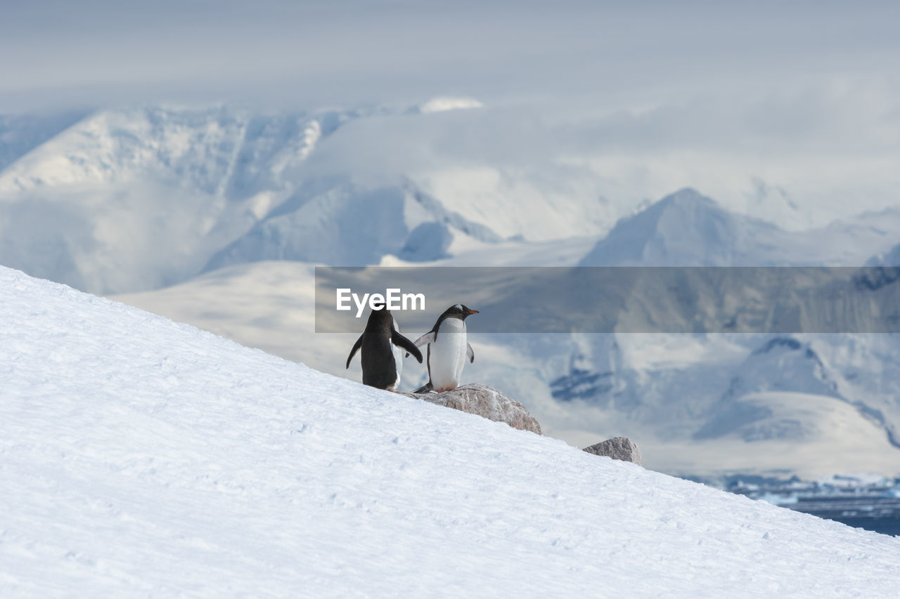 VIEW OF A HORSE ON SNOW