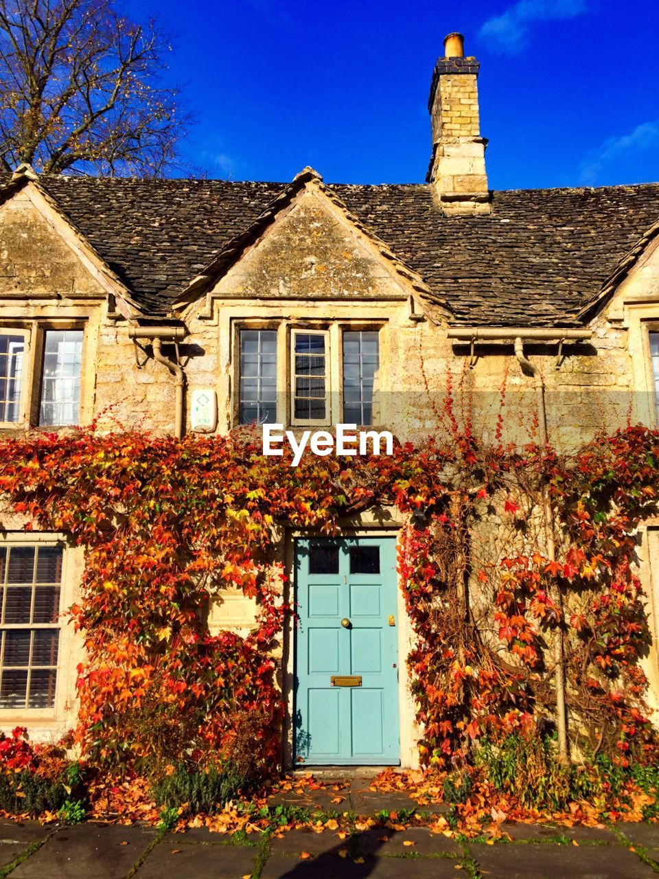 building exterior, architecture, built structure, window, outdoors, house, plant, no people, autumn, ivy, day, growth, nature, flower, tree, sky, clear sky