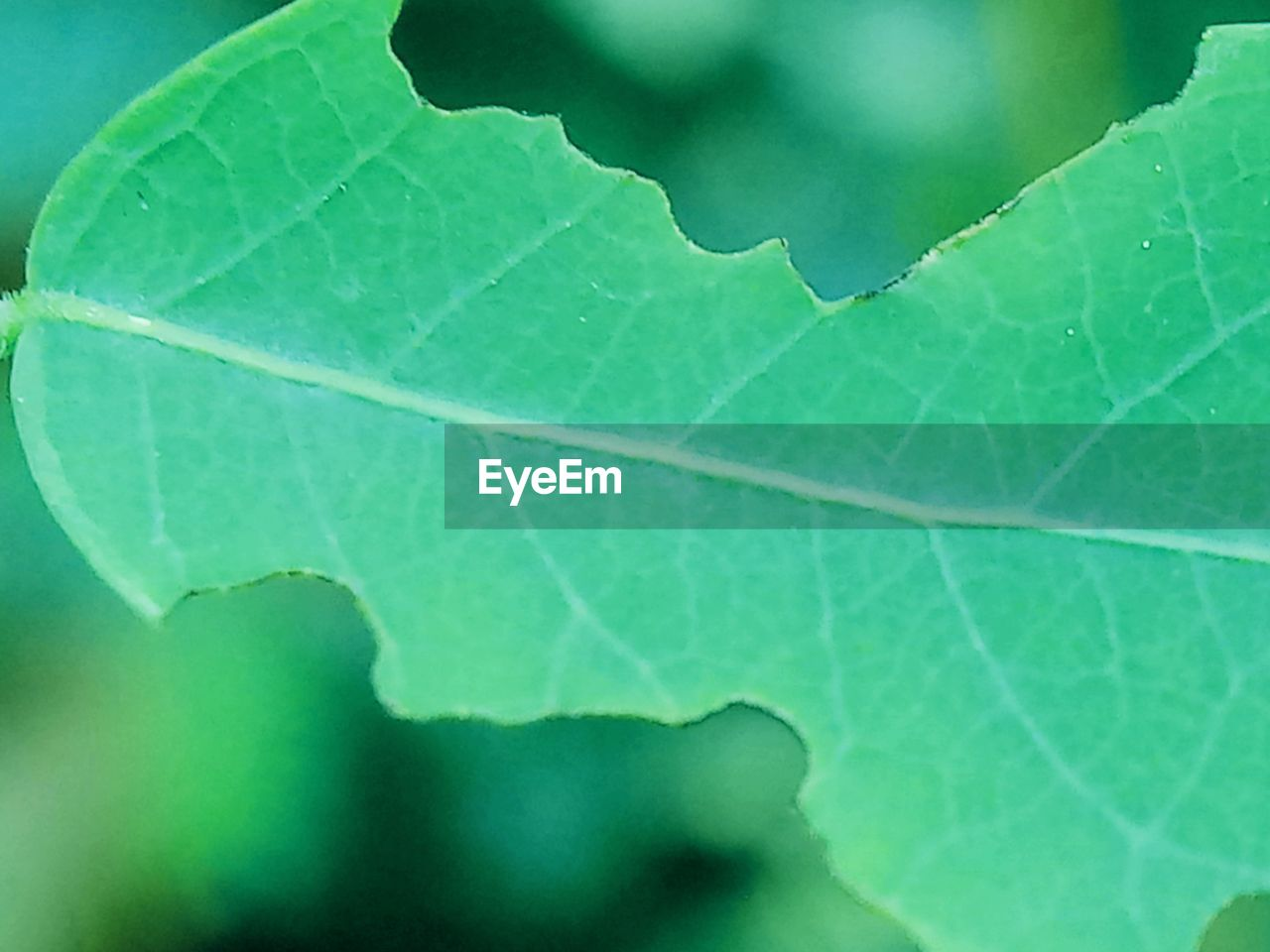 plant part, leaf, green color, close-up, nature, plant, no people, leaf vein, outdoors, day, growth, focus on foreground, beauty in nature, natural pattern, freshness, fragility, vulnerability, backgrounds, full frame, macro